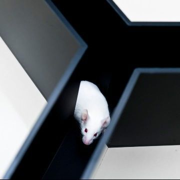 Into the Maze: Preclinical Data and The Cloud