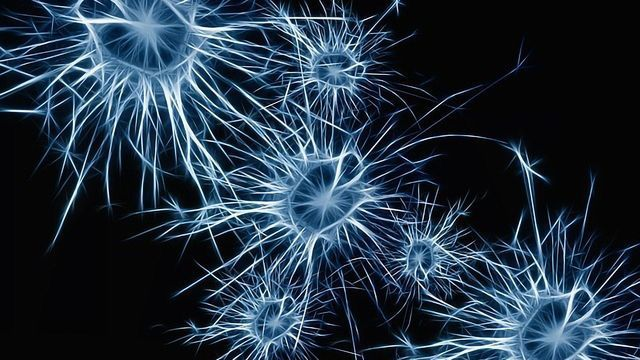 Is This Brain Cell the Link Between Consciousness and Its Contents?