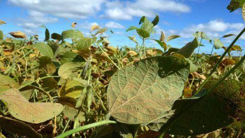 Soybean Pathogen Genome – Assemble!