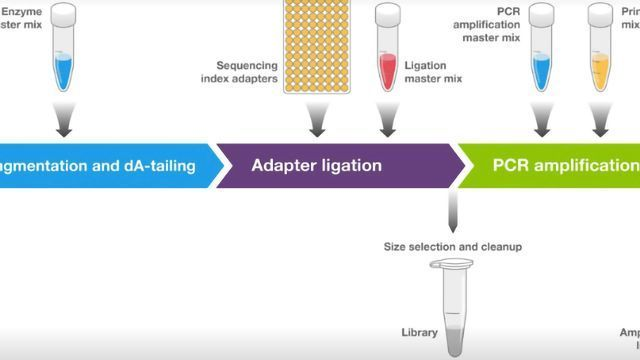 Invitrogen™ Collibri™ NGS Library Preparation Kits for Illumina™ Systems