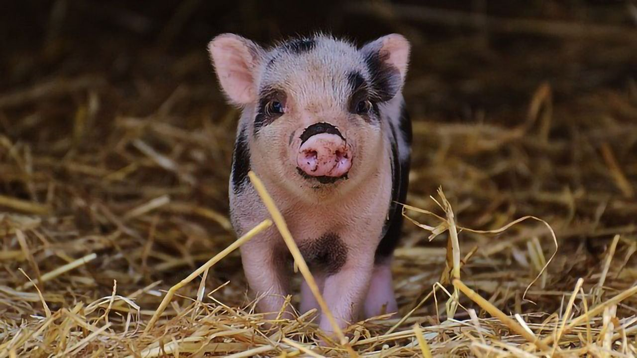Should the Food Industry Be Concerned by the Sharp Rise in Antibiotic Resistance in Food Animals?