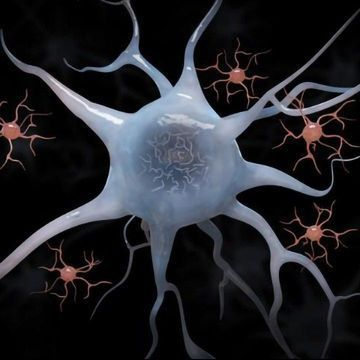 APOE-Activated Microglia Could Form Link Between Tau Tangles and Neurodegeneration, Suggests Mouse Study