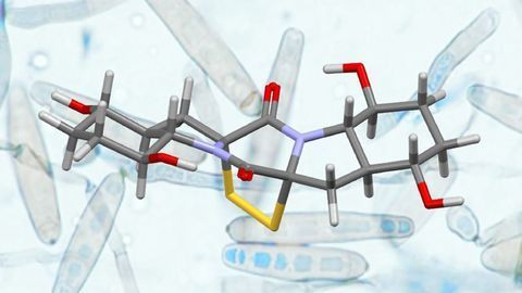 Novel Strategy for Synthesizing Complex Natural Products