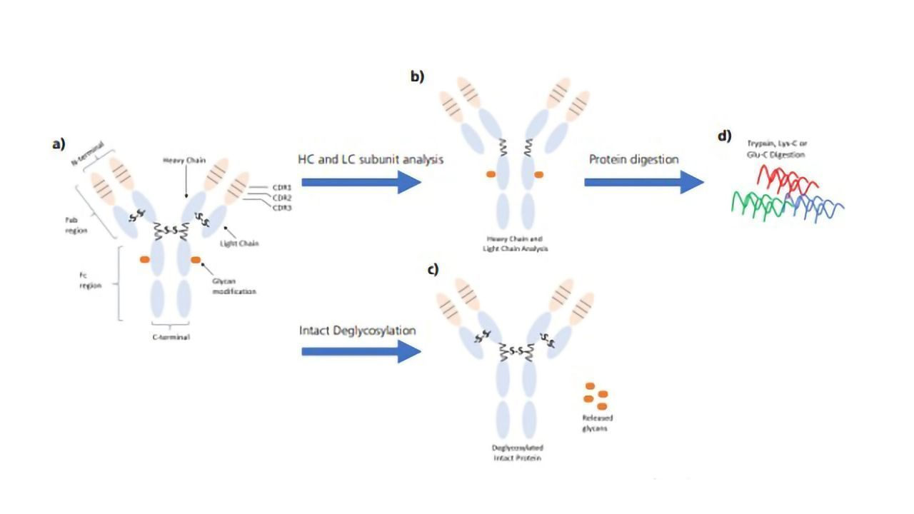 Monoclonal Antibody Workflows Using High-resolution Q-TOF LCMS and the Protein Metrics Software Suite