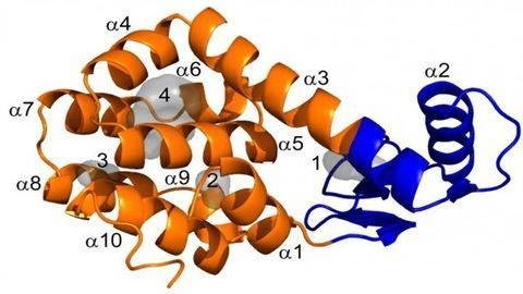 How Do Empty Spaces Make a Protein Unstable?
