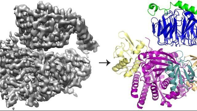 The Intricate Way Two Proteins Interact To Promote Cell Movement Unveiled