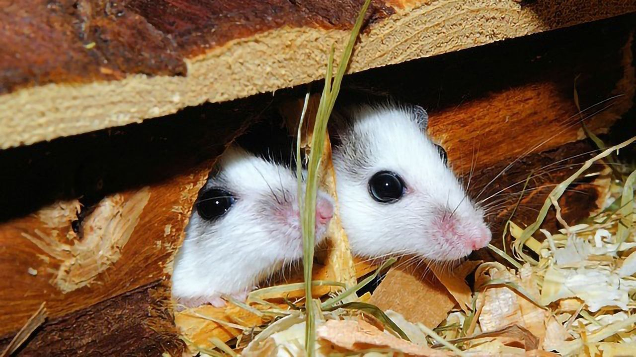 Male and Female Mice Have Different Brain Cells