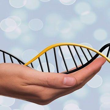 "New CRISPR Editing System a ""Genetic Word Processor"""