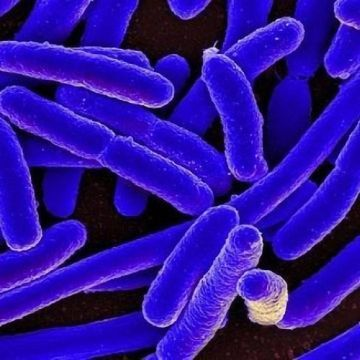 Bacteria's Transporter Proteins Changed Drastically by Minor Mutations