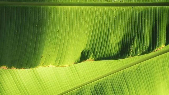 Banana Leaf Technology - Tenith Adithyaa - TEDxIIMKashipur