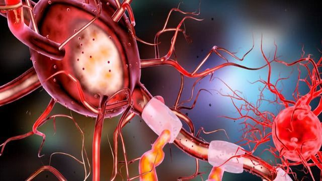 New Fundamental Insights into How Memory Change with Age has Been Revealed