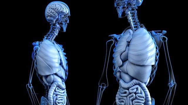 """Bacteria Need Genetic """"Passcode"""" To Survive the Gut"""