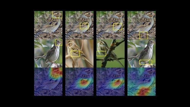 Birdwatching AI Unlocks the Black Box of Computer Vision