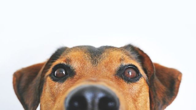 Your Dog Might be Hiding Its True Colors