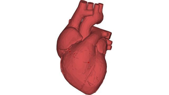 New Technique Lays Foundation for Regenerative Cardiac Therapies