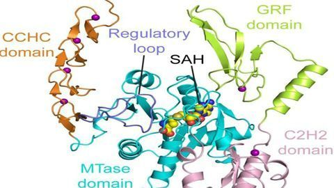 Structure of a Novel Enzyme Linked to Cell Growth and Cancer Is Cracked
