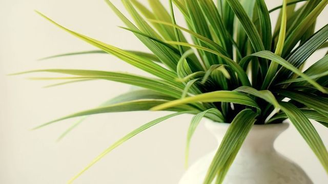 Indoor Plants Aren't the Key to Better Air