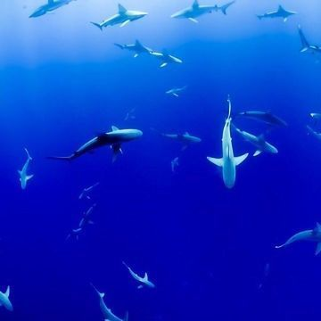 Shark Skin Microbiome Resists Infection
