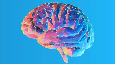 Researchers Discover New Pathways in the Brain's Fear Center