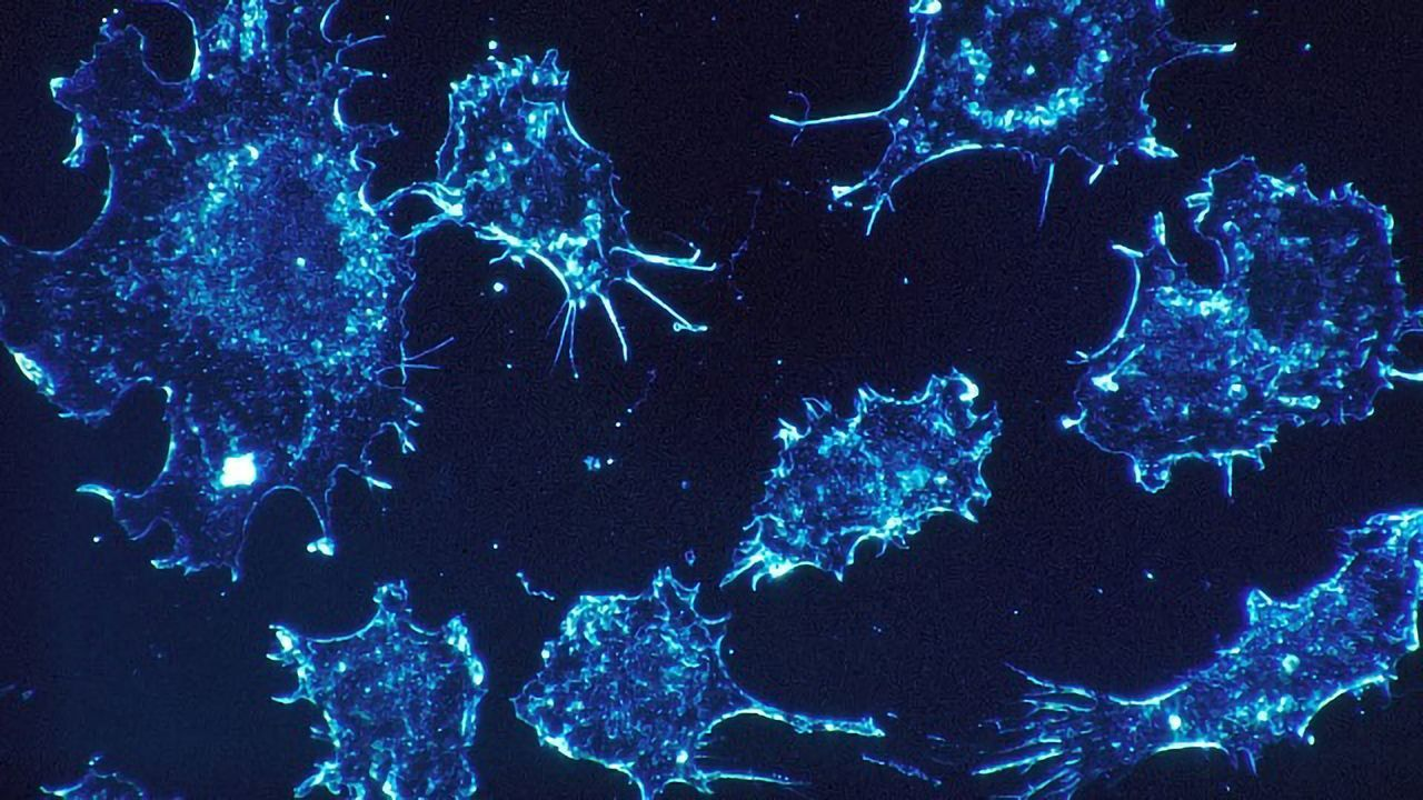 Cell Death or Cancer Growth: A Question of Cohesion