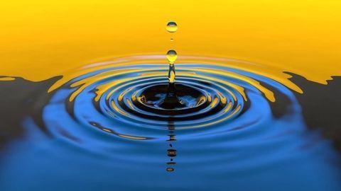 Key Water Purification Properties of Moringa Seeds Revealed