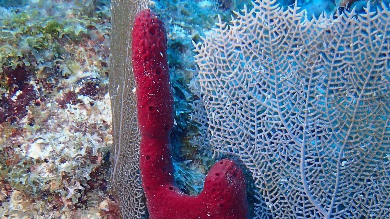 Breakthrough Improves Marine Sponge Cell Culture