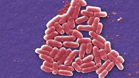 E. coli Put on a Carbon Dioxide Diet