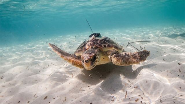 Animals Could Aid Ocean Monitoring Efforts