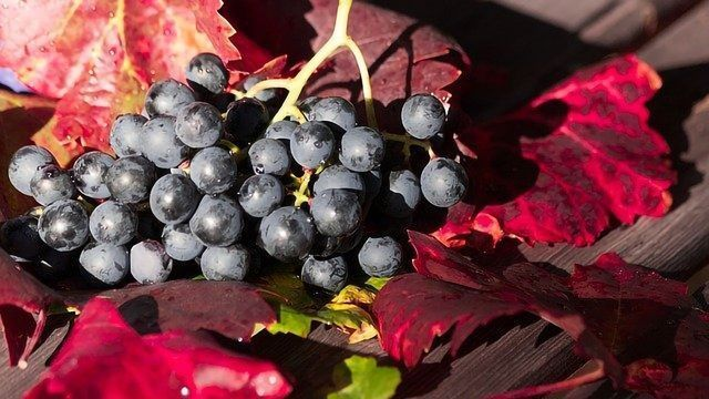How Might Grape Skins Help Our Roads?