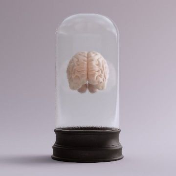 """Cutting Through the Headlines: Are Scientists Really Growing Sentient """"Mini-brains""""?"""