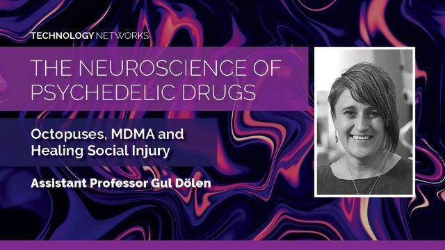The Neuroscience of Psychedelic Drugs: Octopuses, MDMA and Healing Social Injury