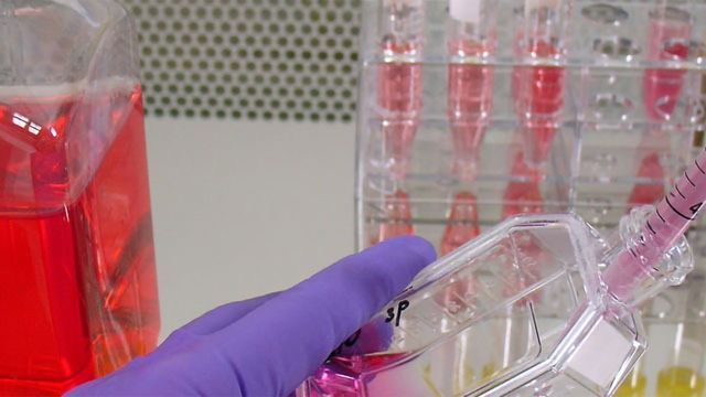 Identifying Problems With Your Cell Culture