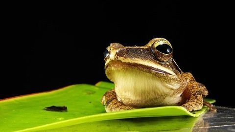 """Researchers Develop a """"FrogPhone"""" to Remotely Call Frogs in the Wild"""