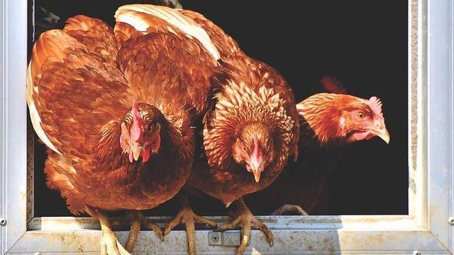 What Blocks Bird Flu in Human Cells?