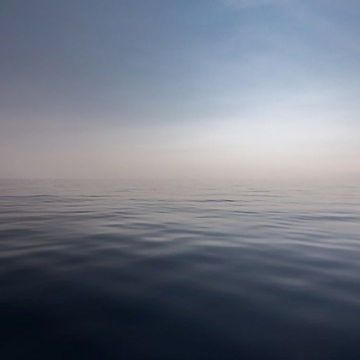 """Could the True Extent of Ocean """"Dead Zones"""" Be Masked by Dark Carbon?"""