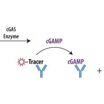 Transcreener® cGAMP cGAS Assay
