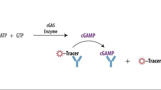Transcreener® cGAMP cGAS Assay