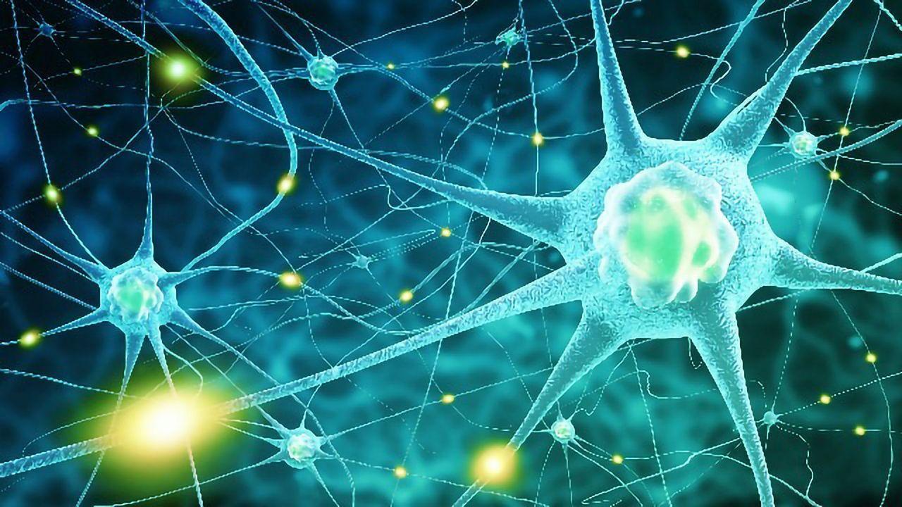 Targeting Individual Neurons Halts Seizures in Animal Models