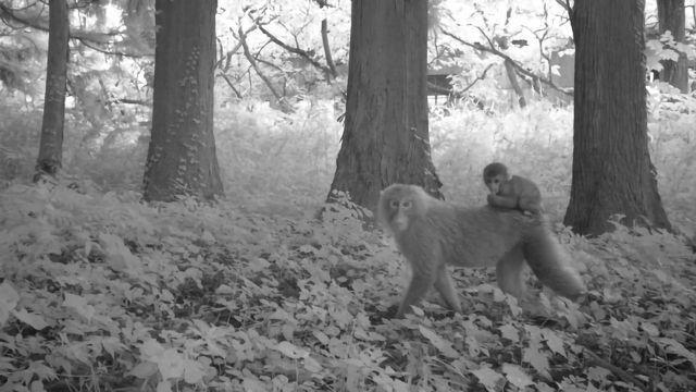 Fukushima Evacuation Zone Abundant With Wildlife Once More