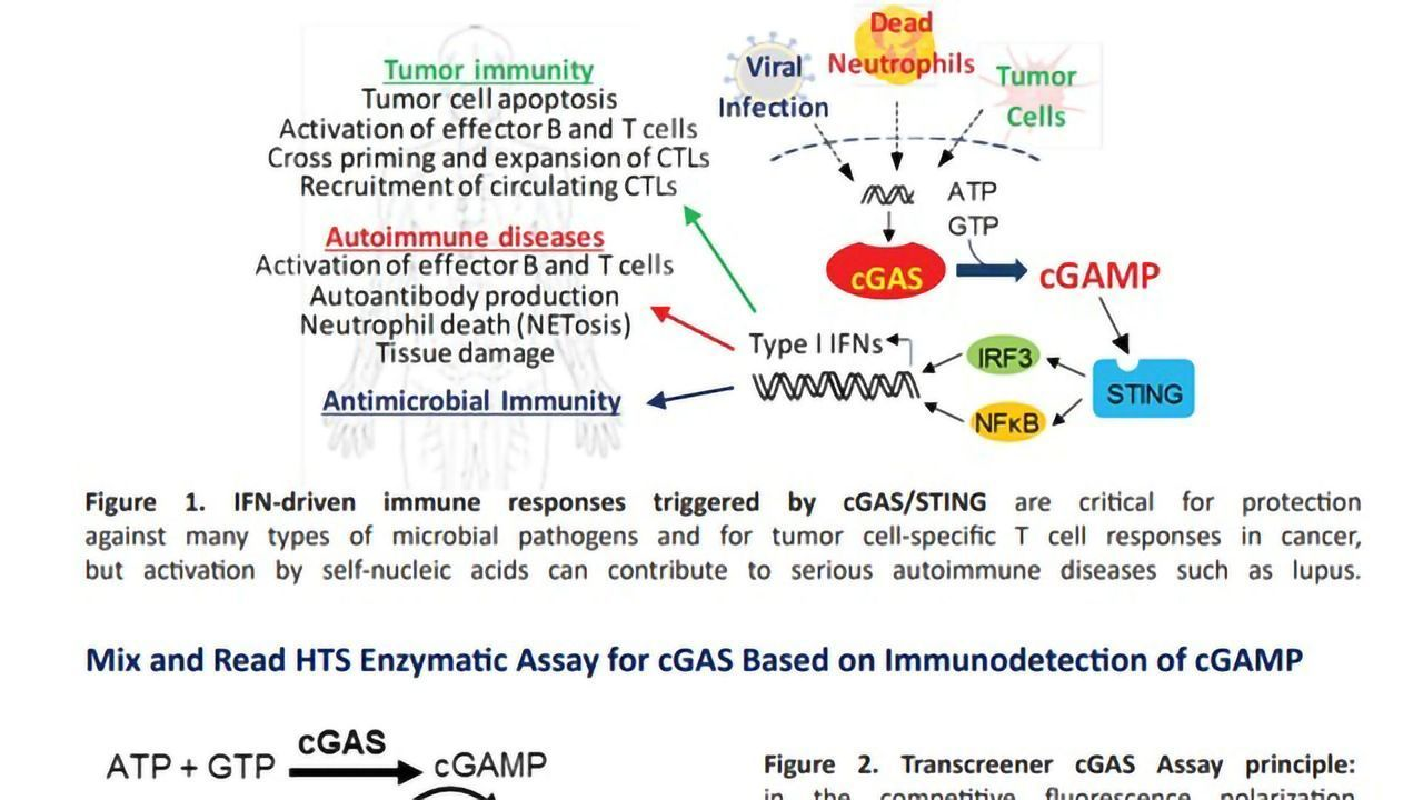 Targeting the cGAS-STING Pathway Using a Homogenous, HTS Compatible cGAS Activity Assay