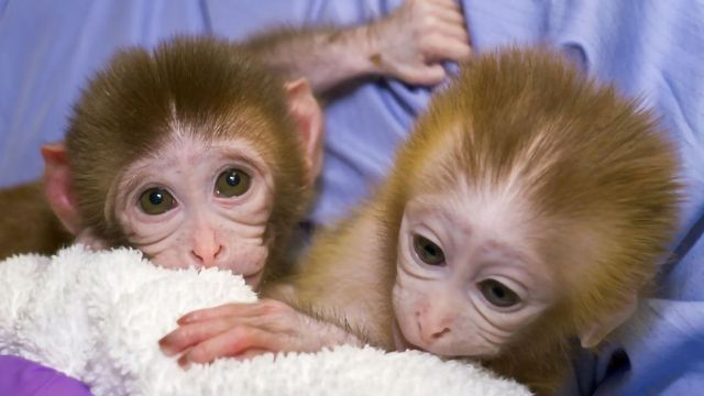 Single Dose Antibody Therapy in Newborns Could Thwart HIV