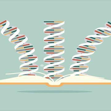 Missense, Nonsense and Frameshift Mutations: A Genetic Guide