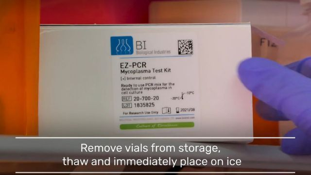 Protocol video: simple and efficient detection of mycoplasma contamination in cell culture