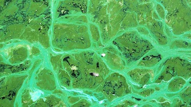 Harmful Algal Bloom Toxins Detected in Urine Test