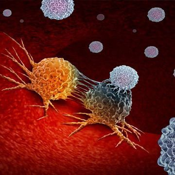 Studies Point to Important Role for B Cells in Promoting Anti-tumor Immunity