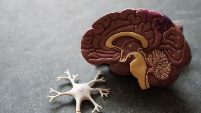 Mouse Study Shows That the Brain Drowns Itself During Stroke