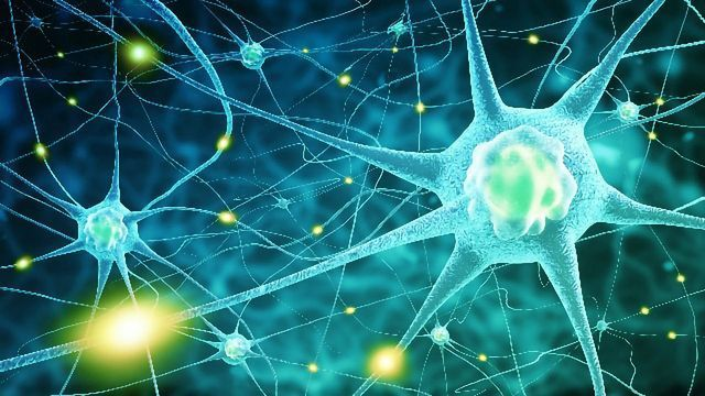 Neuron Patterns Help Reveal the Secrets of Brain Communication