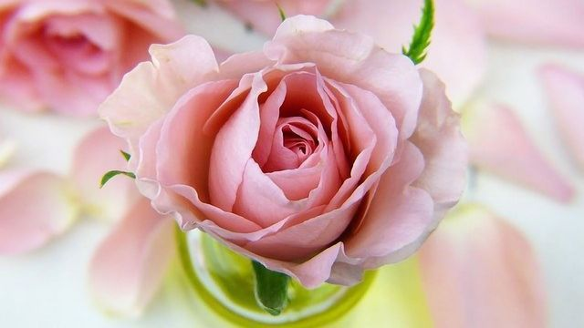 Sniff From a Rose: Scent Sticks Improve Learning During Sleep