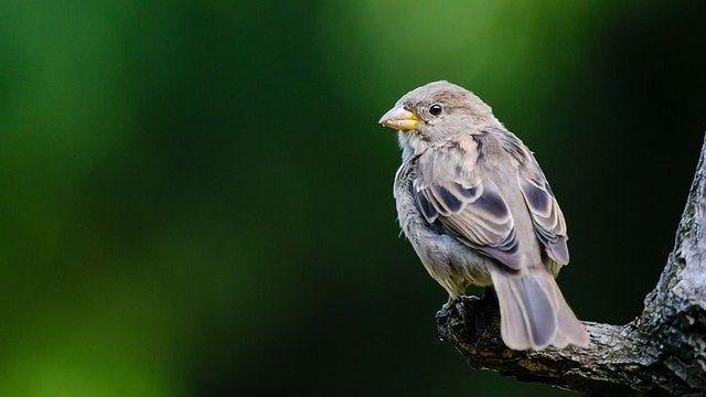 Birds Not the Culprit in Foodborne Illness