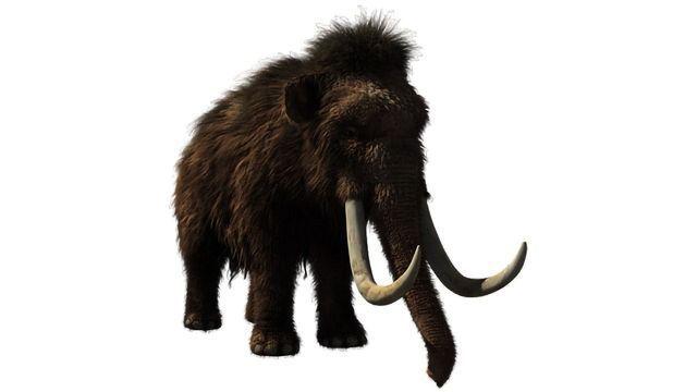 Resurrecting a Mammoth's Broken Genes